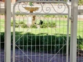 Victorian woven wire pa gate