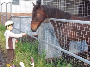 bored horse being fed by child