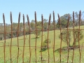 Contemporary wheat design wrought iron fence